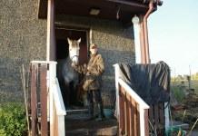 horses, scotland, uk, pony