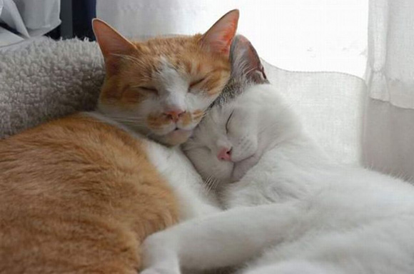 20 Ways To Celebrate National Cat Day