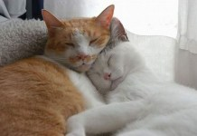 Cats, cute animal pictures, cuddling, love valentine's day