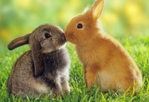 Bunnies, Baby Animals, cute animal pictures, valentine's day, love