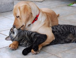 Dogs, Puppies, Kittens, Cats, Valentine's Day, Love, Cute Animal Pictures