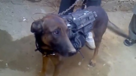 Taliban, war, Afghanistan, Hostage Videos, Military Dogs, Dogs