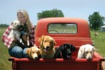 miranda lambert, blake shelton, dogs, puppies, adopted dogs, muttnation foundation, country music, country music stars, celebrities