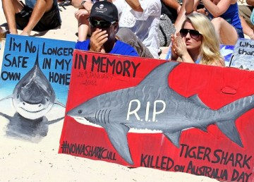 Protests against shark culling have increased after the Western Australian government introduced a culling policy following an increase in shark attacks in the region