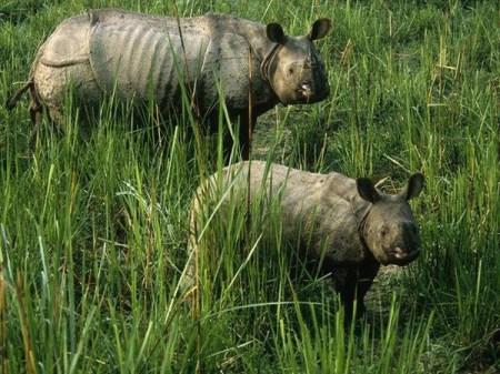 mini animals, tiny animals, baby animals, rare animals, exotic animals, rhinos, pictures of animals