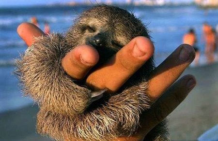mini animals, tiny animals, baby animals, rare animals, exotic animals, sloths, pictures of animals