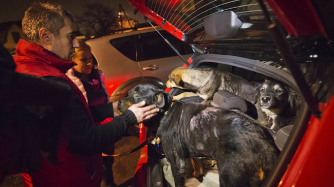 dogs, stray dogs, sochi, winter olympics, winter olympics sochi, winter olympics 2014, sochi strays, animal activists, animal rights, animal welfare, pets, pictures of animals
