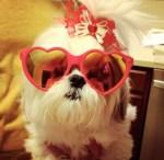Chazzy Sunglasses