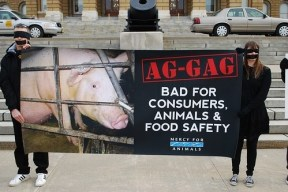 (ANIMAL ABUSE/AG-GAG LAWS) Mercy For Animals Protests against law that allows animal abuse.