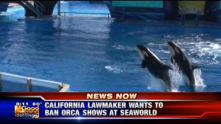 "Inspired by allegations of animal abuse made in the  documentary ""Blackfish,"" a California lawmaker introduced legislation that would ban SeaWorld from using orcas in its San Diego shows./Photo credit: KUSI.com"