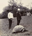 Jonathan the Tortoise in his younger days