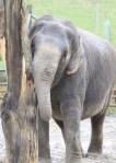Anne The Ex-circus Elephant.