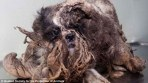 Matted Puppy Found On Side Of The Road