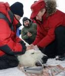 Putin Tags a Tranquilized Polar Bear