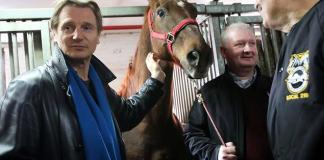 liam neeson, horse carriage, new york, new york city, de blasio, animal cruelty, animal abuse