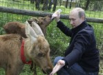 Putin Feeds Milk to Elk