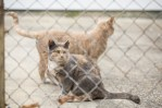 Rachel Gorlin Cat Colonies