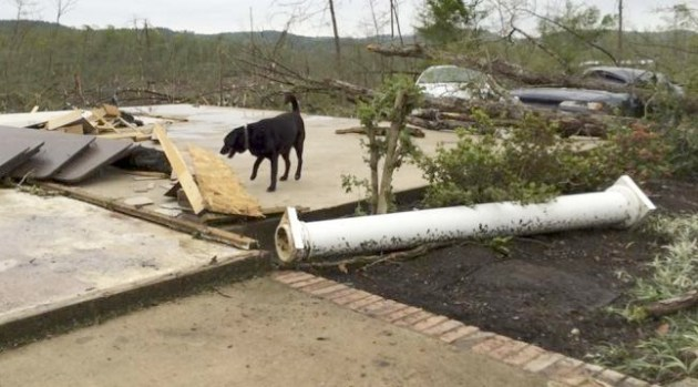 A dog walks on a concrete slab—what is left of a house in Paron, Arkansas. Photo Credit: AP Photo/Christina Huynh