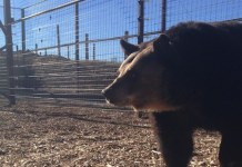 PETA, Bears, Sanctuary