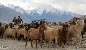 wakhan valley, wakhan national park, afghanistan, afghanistan wildlife, wildlife, national parks, environmental protection, conservation