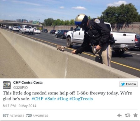 Chihuahua, chihuahua rescue. california, california highway patrol, touching tales, cute pictures, twitter