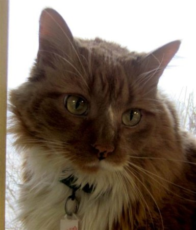 Pudding had been adopted hours earlier when he jumped to his guardians rescue. Photo Credit: Door County Humane Society
