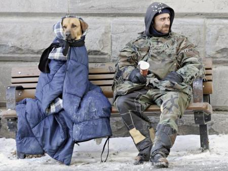 canada, homeless, homeless people, homeless pets, dogs, animal rights, animal welfare