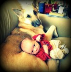 Cute animal pictures, cute baby pictures, babies, dogs, big dogs, large dogs