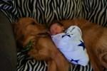Baby sleeps on dog