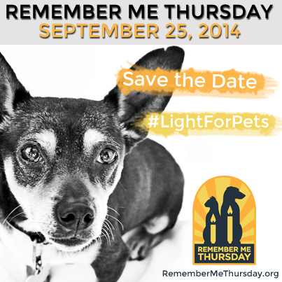 Every year, over 3.4 million shelter pets are euthanized before being adopted. Photo credit: Animalcenter.org