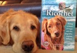Ricochet, a golden retriever, teaches people to love and support one another in times of hardship. Photo credit: Animalfair.com