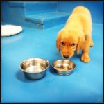 puppy dog with food and water bowls