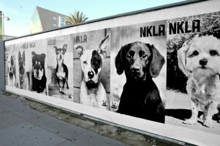 NKLA's efforts have found homes for over 70,000 dogs and cats. Photo credit: Los Angeles I'm Yours