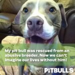 Pit bulls, pitbulls, dog pictures, cute dog pictures, adopt dogs