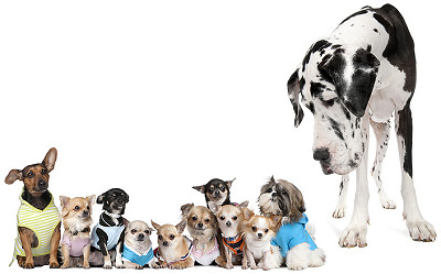 Smaller dogs are more likely to get injured than bigger dogs. Photo credit: The animals.pics