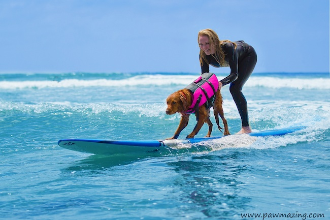 Ricochet helps people with disabilities to balance on a surfboard. Photo credit: Pawmazing.com
