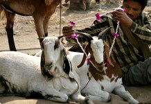 The court in India feels that animal sacrifice should no longer be practiced in the modern era. Photo credit: Piyal Adhikary/EPA