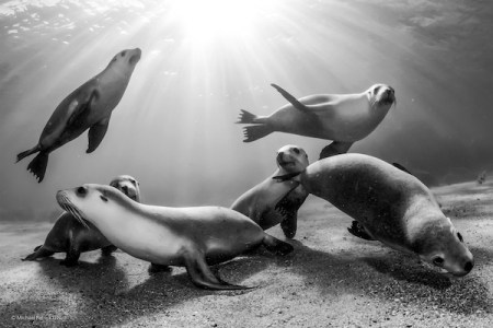 Wildlife, gallery, wildlife gallery, wildlife photographer of the year, competition, Australia, Australian sea lion, baby sea lions