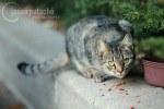 Stray cat sites on sidewalk curb
