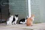 Four Stray Cats
