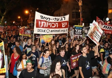 Animal rights activists protested in Tel Aviv to help save working horses and donkeys. Photo credit: REVITAL TOPIOL