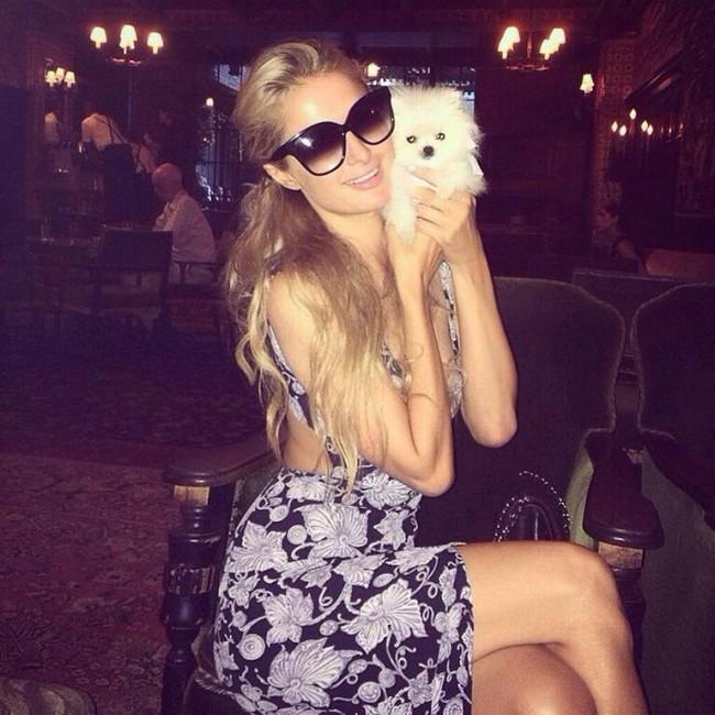 Paris Hilton's teacup pomeranian can actually fit into a teacup. Photo credit: Petflow.com