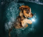 Adorable Puppy In Water