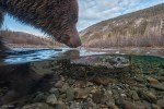Wildlife, gallery, wildlife gallery, wildlife photographer of the year, competition, Bear, Salmon