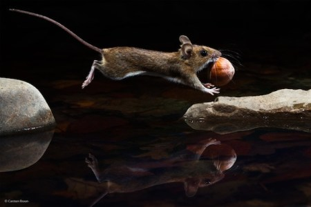 Wildlife, gallery, wildlife gallery, wildlife photographer of the year, competition, Mouse