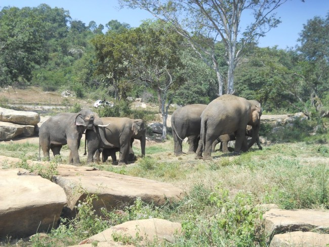 The forested sanctuary allows elephants to move about rather than be chained in place. Photo credit: The Dodo