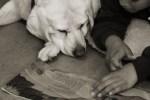 Good Dog Art SF SPCA