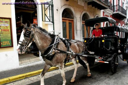 A family-owned business operated many of the horse-drawn carriages in San Juan. Photo credit: Jeff Greenberg