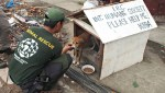 HSI rescues dog after Nepal earthquake