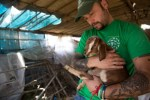 HSI volunteer with orphaned baby goat in Nepal, earthquake relief efforts